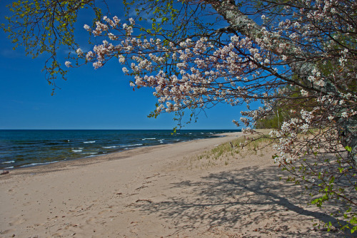 aestheticmichigan:  12 Mile Beach Spring Floweres by Gary of the North on Flickr.