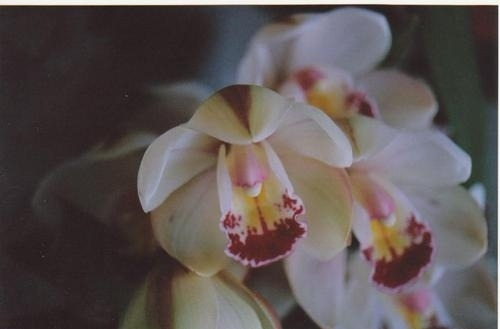 We humans think we are smart, but an orchid, for example, knows how to produce noble, symmetrical flowers, and a snail knows how to make a beautiful, well-proportioned shell. Compared with their knowledge, ours is not worth much at all. We should bow deeply before the orchid and the snail and join our palms reverently before the monarch butterfly and the magnolia tree. The feeling of respect for all species will help us recognize the noblest nature in ourselves. Thich Nhat Hanh
