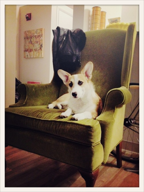 Denver has his own throne at home.