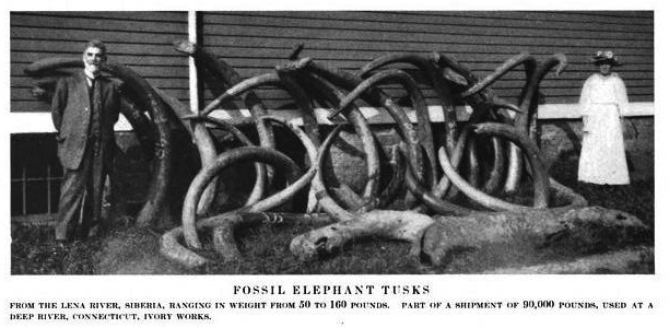 from GF Kunz (1916) Ivory and the elephant in art, in archaeology, and in science