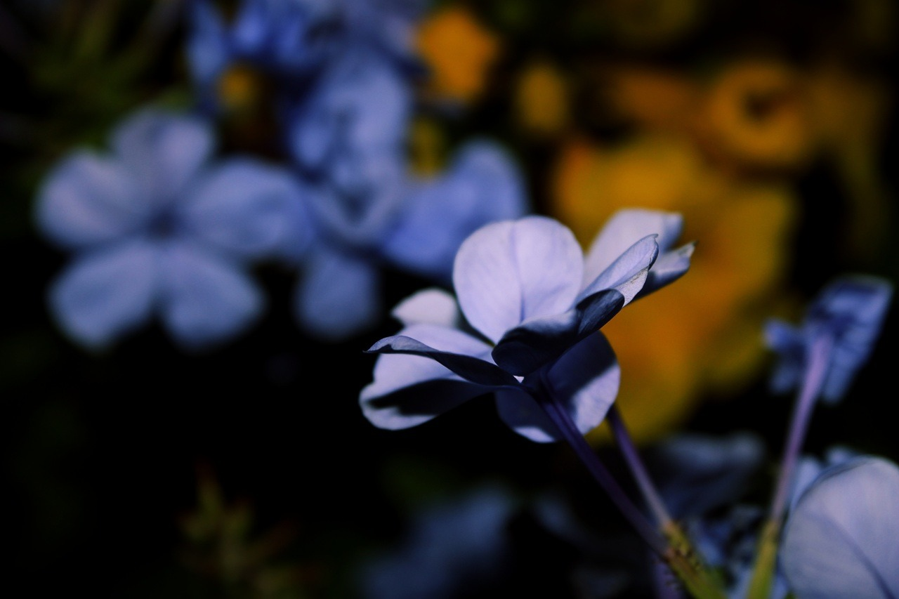 More flowers in the dark.