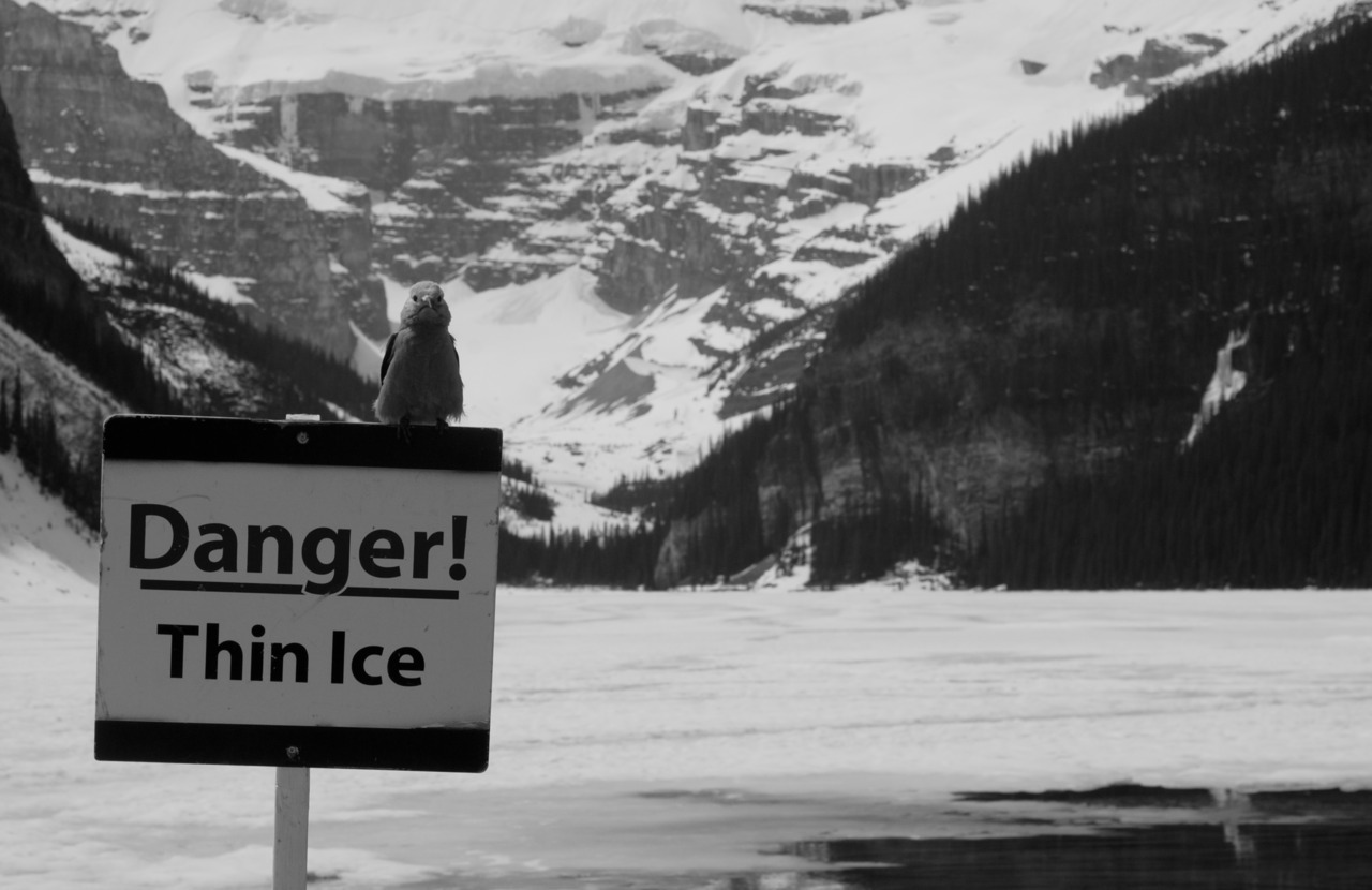 A bird, perched on a sign in Lake Louise