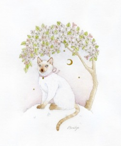 a cat under the bougainvillea  watercolour, gold acrylic and graphite  by Calliope Bridge