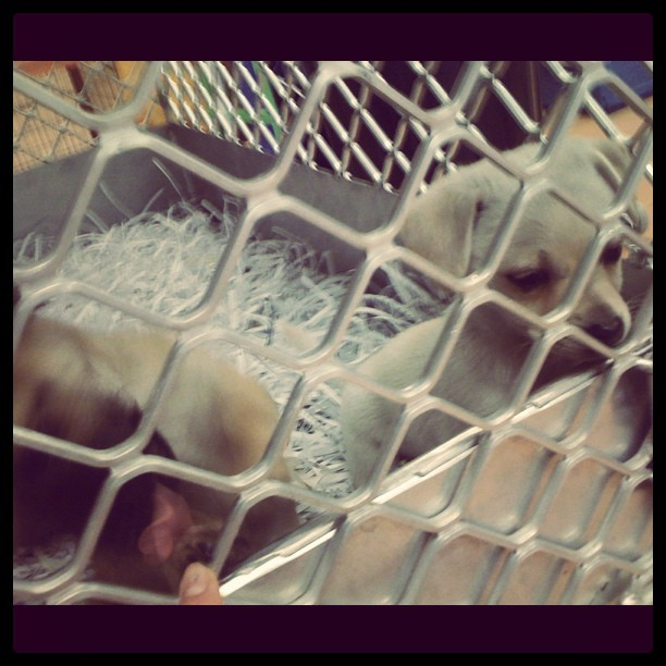 I want all the puppies! *_____* (Taken with instagram)