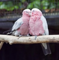 (via Love is Life In Color / pink birds in love…)
