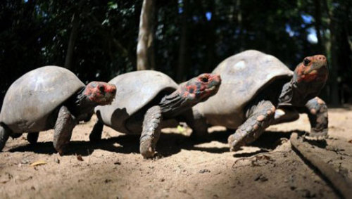 mothernaturenetwork:  Scientists lift lid on turtle evolutionTurtles are closer relatives of crocodiles and birds than of lizards and snakes, according to researchers.
