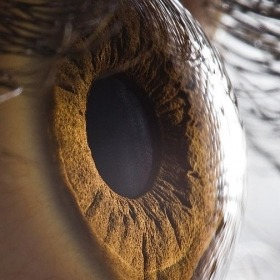 (via Extreme Close Up of Human Eye)
