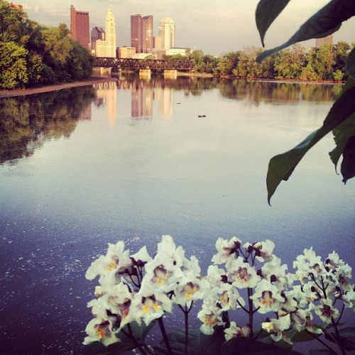 #catalpa with #Columbus skyline in the background (Taken with instagram)