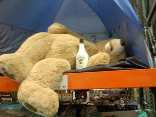 collegehumor:  Stuffed Bear is Drunk in Tent Malibu? That bear's going to have one hell of a hangover.  Late night huh?