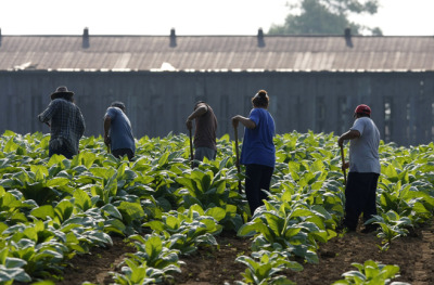 "humanrightswatch:  The US must stop sexual violence against immigrant farmworkers. Hundreds of thousands of immigrant farmworker women and girls in the United States face a high risk of sexual violence and sexual harassment in their workplaces because US authorities and employers fail to protect them adequately. In a new 95-page report, Human Rights Watch documents rape, stalking, unwanted touching, exhibitionism, or vulgar and obscene language by supervisors, employers, and others in positions of power. Most farmworkers interviewed said they had experienced such treatment or knew others who had. And most said they had not reported these or other workplace abuses, fearing reprisals. Those who had filed sexual harassment claims or reported sexual assault to the police had done so with the encouragement and assistance of survivor advocates or attorneys in the face of difficult challenges. Farmworkers described experiences such as the following: A woman in California reported that a supervisor at a lettuce company raped her and later told her that she ""should remember it's because of him that [she has] this job."" A woman in New York said that a supervisor, when she picked potatoes and onions, would touch women's breasts and buttocks. If they tried to resist, he would threaten to call immigration or fire them. Four women who had worked together packing cauliflower in California said a supervisor would regularly expose himself and make comments like, ""[That woman] needs to be fucked!"" When they tried to defend one young woman whom he singled out for particular abuse, he fired all of them. © 2011 AP Photo  The abuses against undocumented immigrants in the United States are bad enough, but if you are both undocumented AND a woman, matters are even worse."