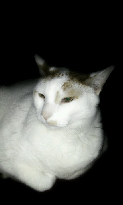 My lil man paco :)#cat#android#awesomeshots#photo#capturedmoments#streamzoo#allshots#(from @sonrie on Streamzoo)