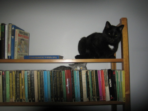 get down from there cats. you are not books. i cannot read you.