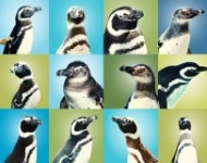 They have penguins at the Aquarium of the Pacific in Long Beach now!!!!! I might need to spend an entire day there.(via Aquarium of the Pacific | Exhibits | June Keyes Penguin Habitat)