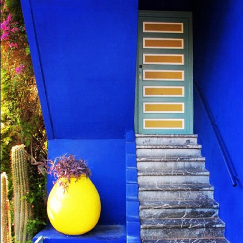 Honey I'm home! Jardin Majorelle, Marrakech, Morocco.