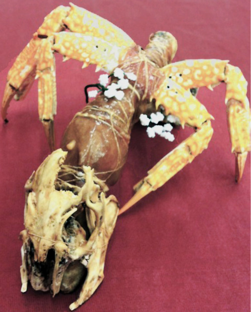 Crustacean Monster. PROP. FEAST Performance. 2012