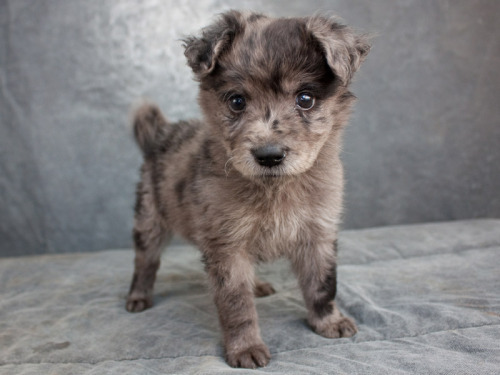 babbyyyyyy please buy me this puppy :)