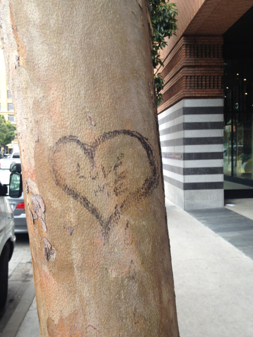"""Love me,"" the tree barked. SF MOMA. May 16, 2012."