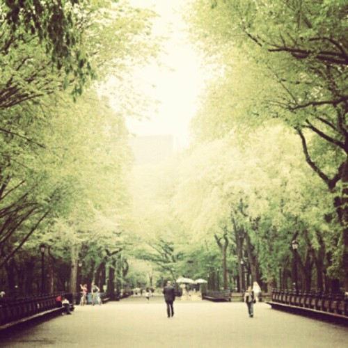 Bliss. #CentralPark #NYC #Newyork #Park  (Taken with instagram)