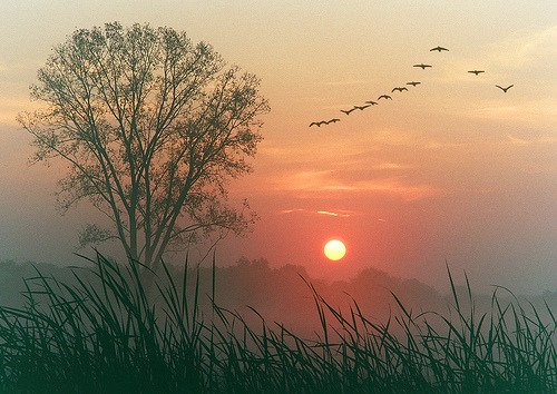 curiae:  Autumn dawn (by James Jordan)