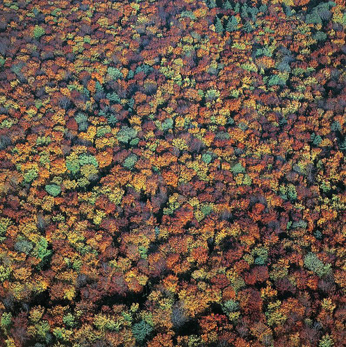 curiae:  Autumn forest (by Aerial Photography)