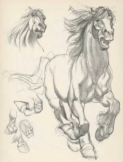 Willy Pogány.  Horse Sketches.   Wow, these are some amazing drawings.