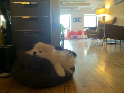 tommypom:  Breaking in my new bed at Tumblr HQ!
