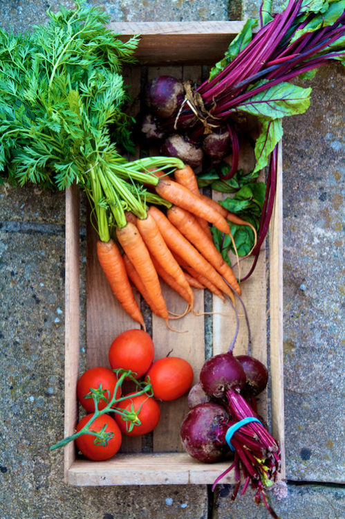 "earth-song:   ""Fresh Winter Veg"" by Toby Kennedy"
