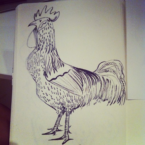 pingszoo:  Just drawing a big ol cock (Taken with instagram)  Le coq