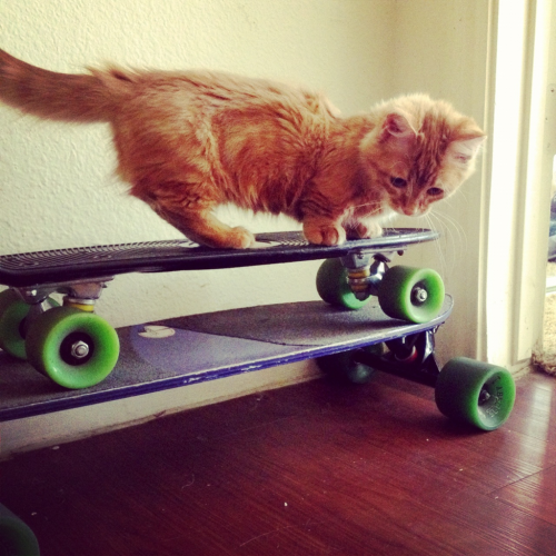 apollospacecat:  Apollo and his skateboards.