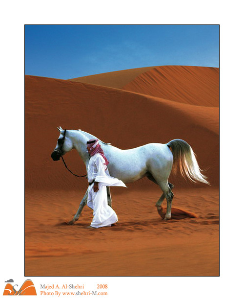 Khaleeji man with Arabian horse in the desert.