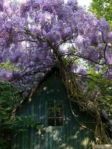 (via A wonderful world of PURPLE!)