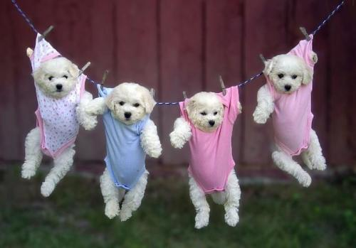 Just hanging around, Todays Cuteness :)  by Mary.For the Dog Lovers :)