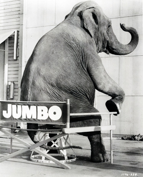 Syd the elephant taking a break between scenes of Billy Rose's Jumbo, 1962