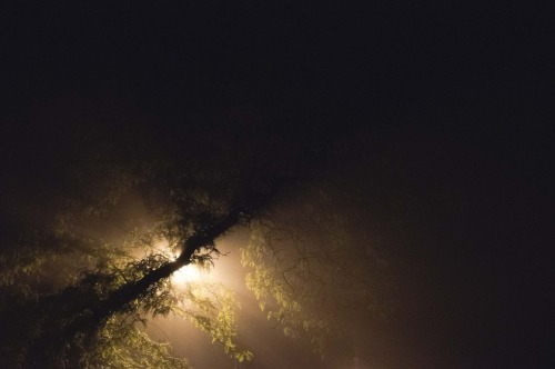 Misty night, again