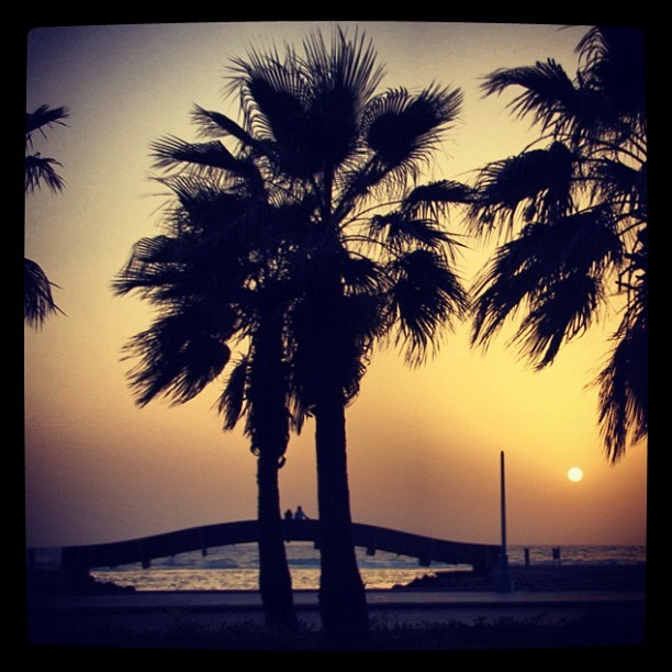 2 #lovers between 2 #Palms on #Jeddah #Cornish watching #SunSet  (Taken with instagram)