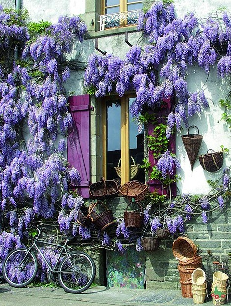 bluepueblo:  Wisteria, Burgundy, France  photo via lauren
