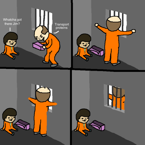 Get it because it's a CELL WALL   Membrane transport proteins