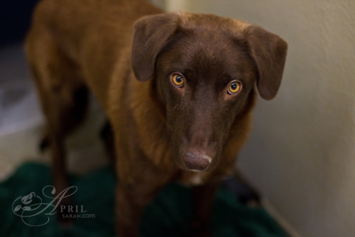 aprilsarahdesign: Look into my eyes…. Capital Humane Society