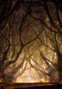 bluepueblo:  Misty Morning, The Dark Hedges, Ireland  photo via tiggersplace