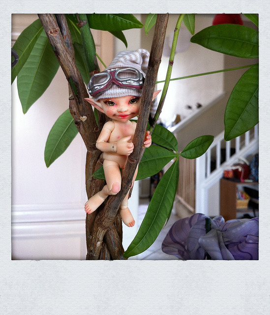 190/365 ADAD 2011 on Flickr.Wysp up in the money tree. Doesn't she have enough gold?