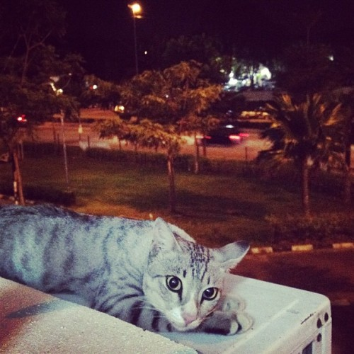 #kucing #cat #catsofinstagram #cats  (Taken with Instagram at Full Time Dreamer Studio)