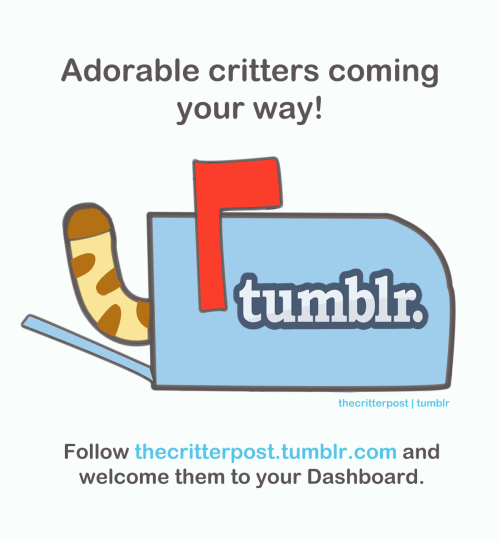 The Critter Post is launching its own Tumblr site soon. Follow the site and stay tuned for the merry adventures of the critters of Critter Alley!