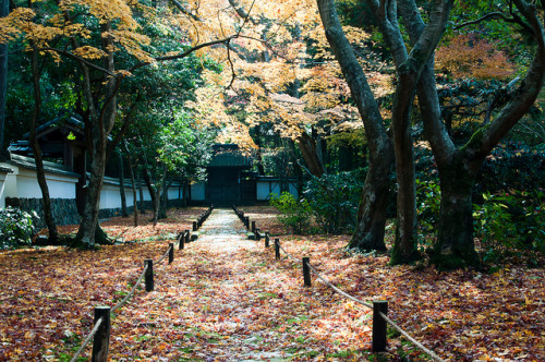 japanlove:  Kyoto-50.jpg by maurizio.mwg on Flickr.