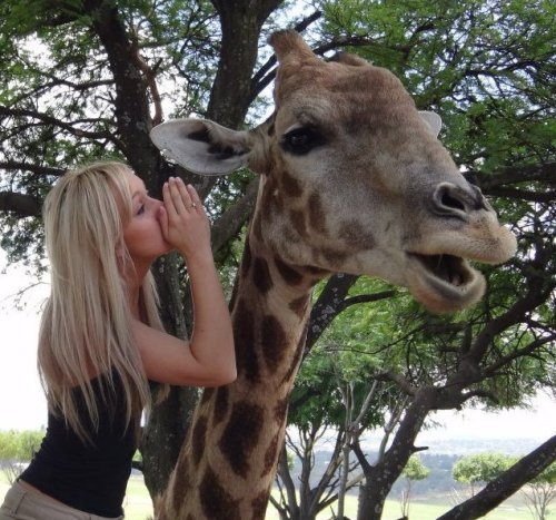 kealoha-kids:  s-erenityvibes:  m-aldives:  giraffe: no way gurl, she did that?!?  (via imgTumble) toooooo cute