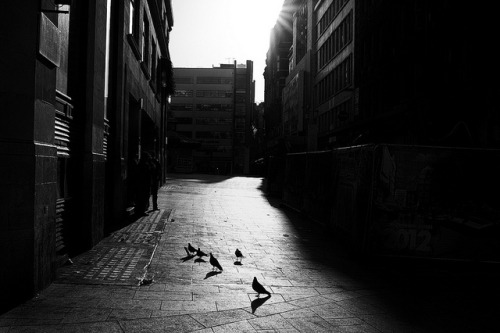 Pigeons, Panton Street by macal1961 on Flickr.