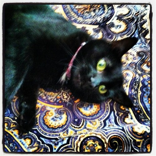 Lily lounging (Taken with instagram)