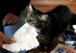 My cat ate my homework.