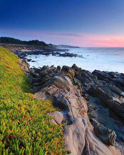 definitelydope:  Encroachment — Bean Hollow State Beach, Pescadero-ish, California (by Jeff Swanson — www.interfacingnature.com)