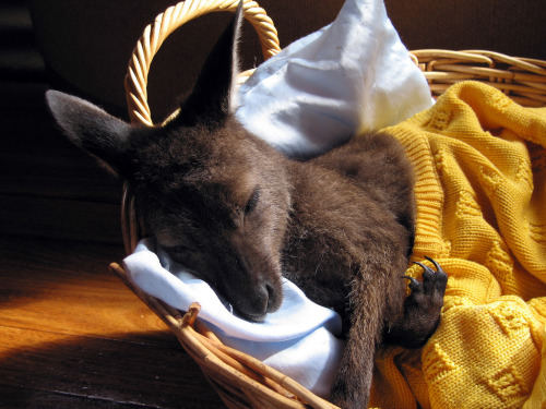 wallaby had nap.