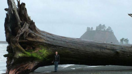 mothernaturenetwork:  Epic driftwood: Monster tree washes ashoreFlooding, high tides and blasting winds worked together to land a massive drift log taller than a single-story house.